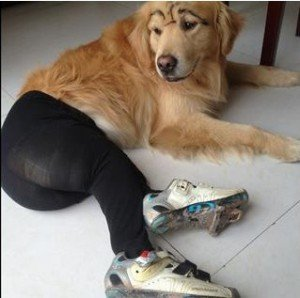 Dogs Wearing Pantyhose is a New Trend