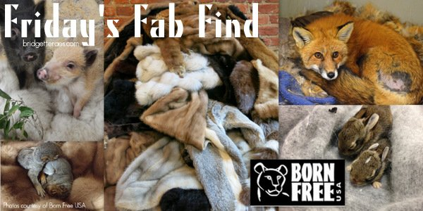 Friday's Fab Find: Born Free USA Fur Donation